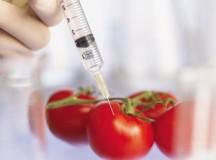ГМО производители и их продукты