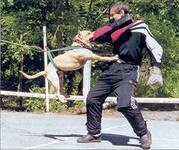 Как использовать электронный отпугиватель собак для дрессировки своего питомца